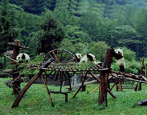 Wolong National Nature Reserve